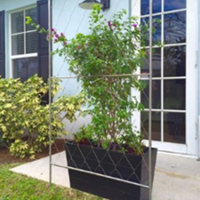 Free Standing Trellis Without Base - 20257-0301